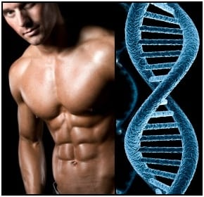 bodybuilding genetics